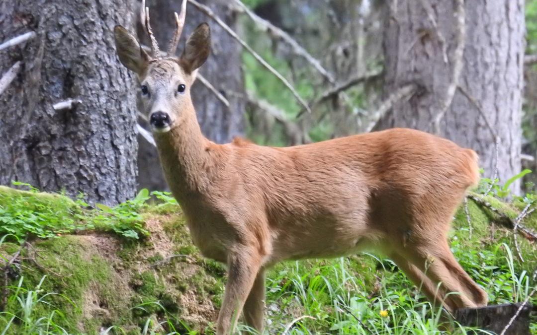 Gestion de la chasse